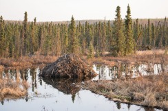 Beaver lodge, Tudor-Muldoon curve.