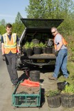 Brian & Jim Durr load irises for transport. Brian, an Eagle Scout candidate, also has a project in Little Dipper Park.